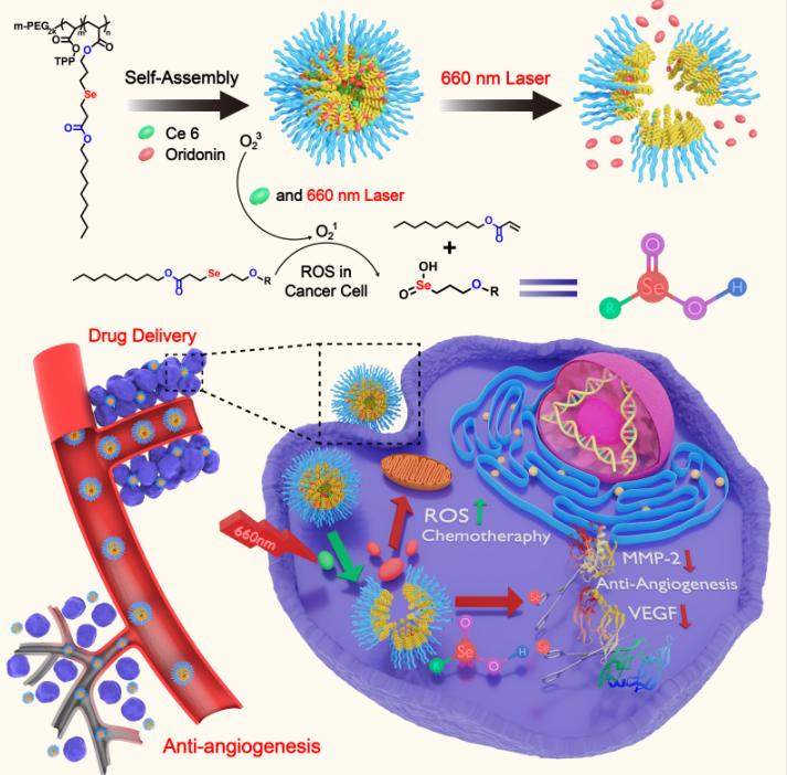 SCX ACS biomaterials-03