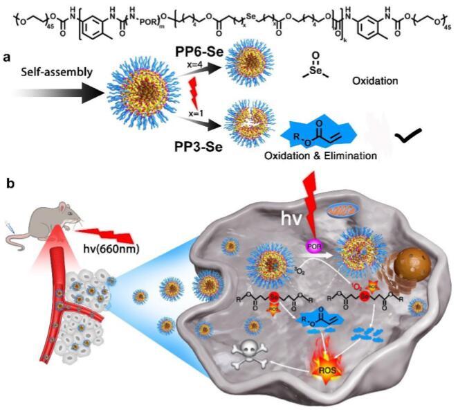 Sun CX Biomaterials 2019
